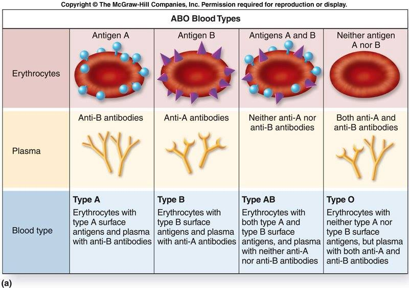 ABO Blood Types with Antigens and Antibodies   Medical Laboratories