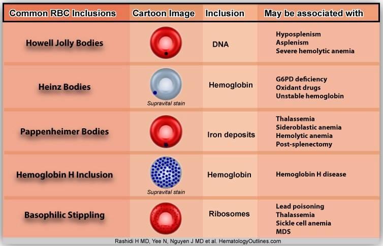 Common RBC Inclusions Diagram