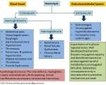 Hemolysis Diagram