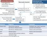 Megaloblastic and non-megaloblastic Anemia Interpretation Diagram