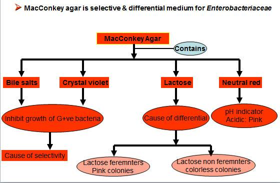 MacKonkey Agar Diagram