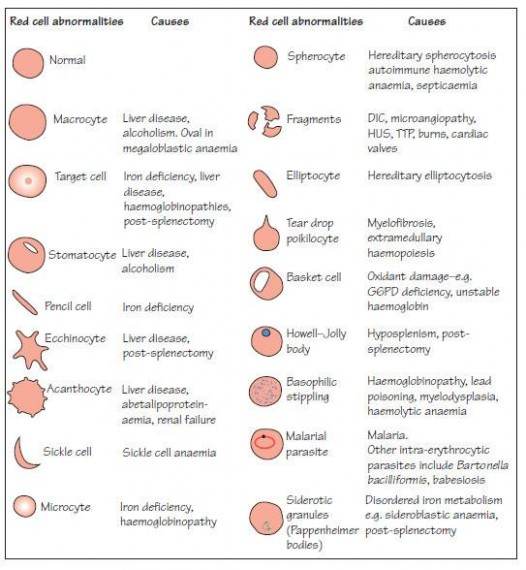 Red Cell Abnormalities Medical Laboratories