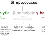 Streptococcus Classification based on blood hemolysis