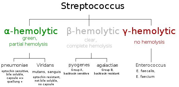 Beta Hemolytic Group B Strep 40
