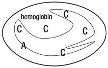 People who have hemoglobin C disease have red blood cells that contain mostly hemoglobin C
