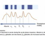 The Acute Phase Response