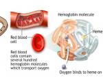Iron in hemoglobin