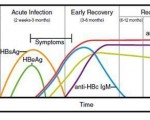 HBV's disease stages and AB-AG