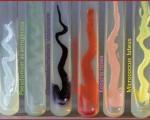Pigment Production