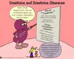 Creatinine and Creatinine Clearance