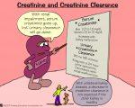 Creatinine and Creatinine Clearance
